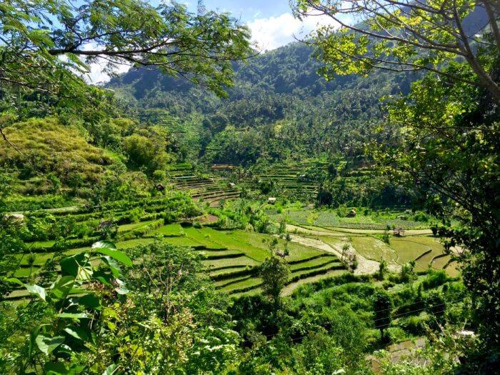 Natur auf Bali