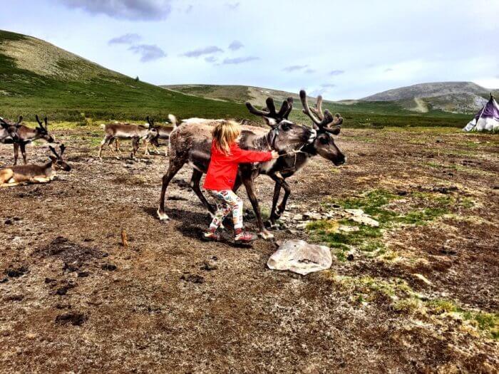 Auf Pferden mit Kind durch die Mongolei - Rentiere