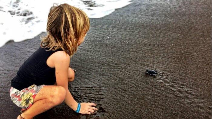 Baby Schildkröten in Costa Rica mit Kind