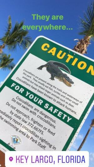 Florida mit Kind - Krokodile